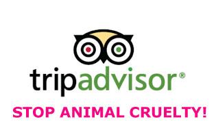 Petizione TripAdvisor Stop Alla Crudeltà Sugli Animali
