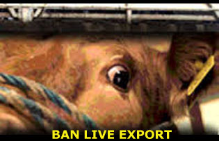 Petizione Ban Live Export